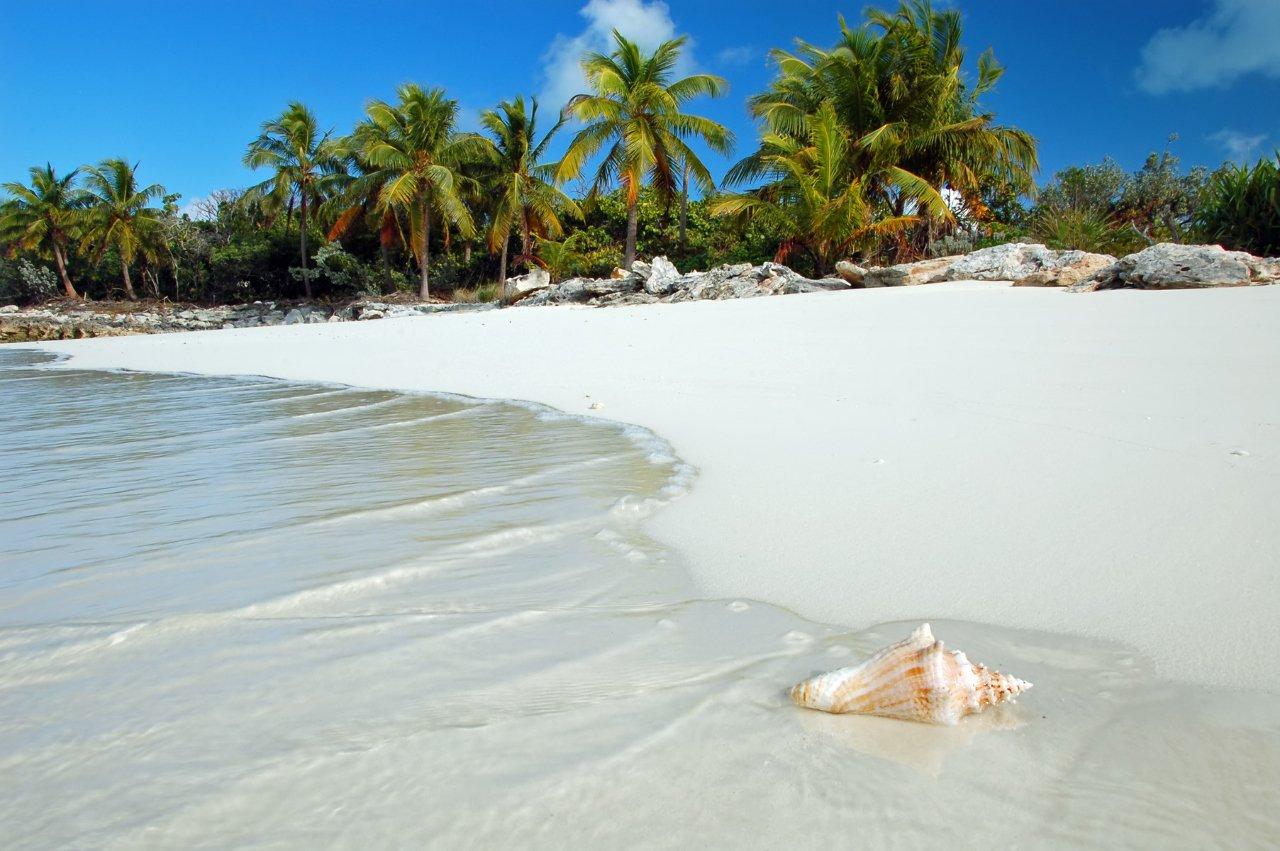 jamaiques-coquillage-sur-la-plage-tropicale-c-wildroze