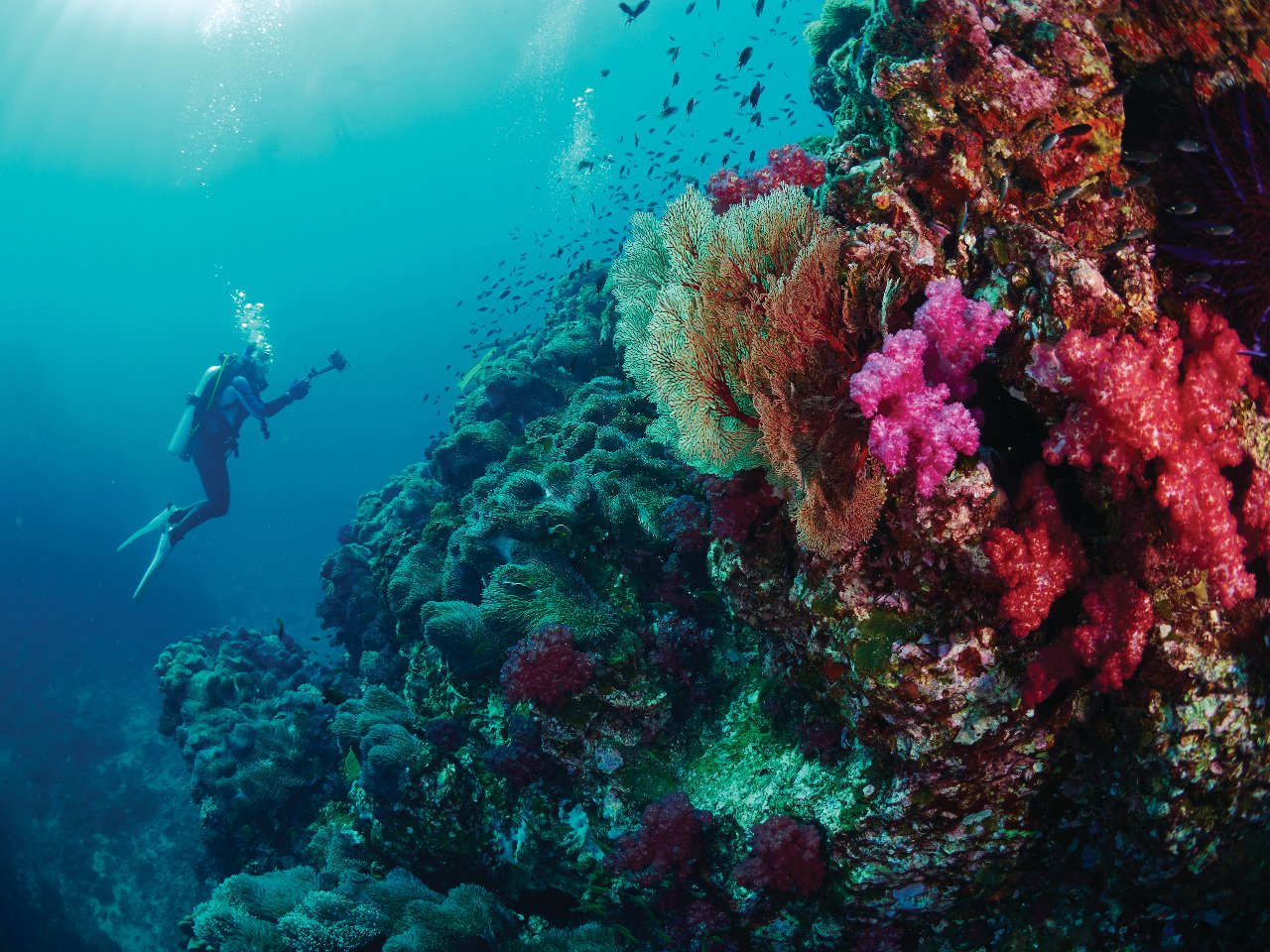 thailande-mer-d-andaman-iles-similan-c-para827