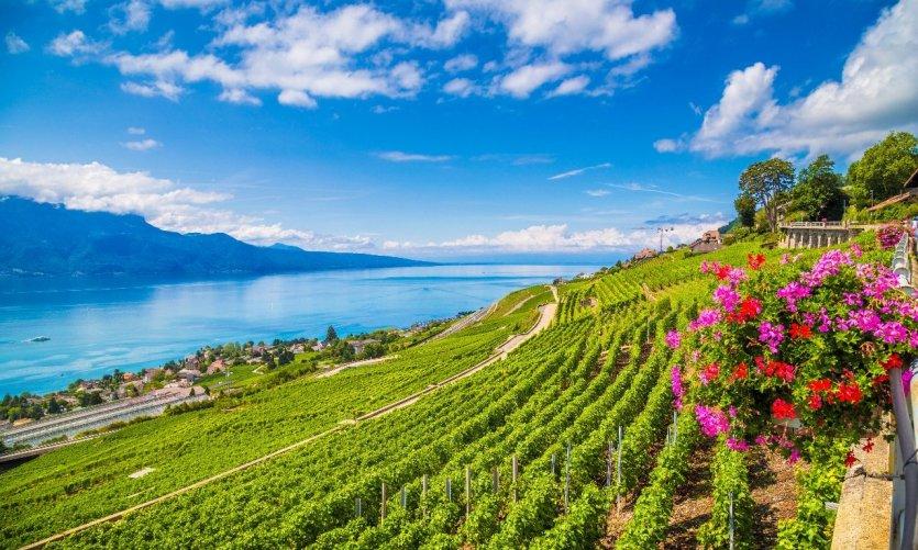 la-re-gion-de-lavaux-vin-au-lac-de-gene-ve-suisse-c-bluejayphoto