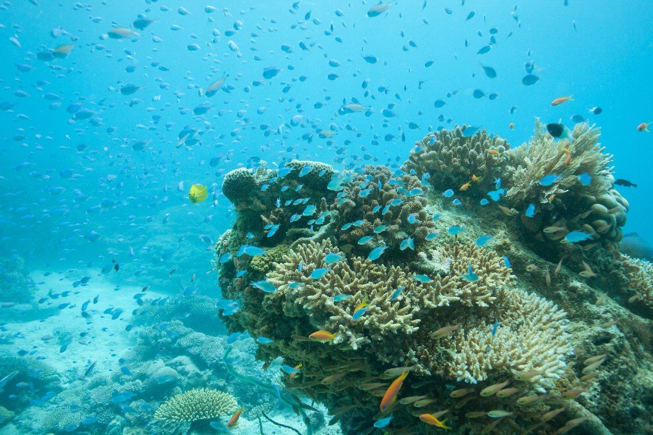 zanzibar-nuages-de-poissons-sur-un-re-cif-de-corail-c-dtamarack